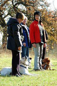 Erziehungskurs 2 @ Hundeschule Uwe Schwitalla | Pforzheim | Baden-Württemberg | Deutschland
