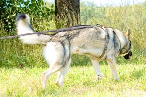 Schnupperkurs Man-Trailing und Fährte @ Hundeschule Uwe Schwitalla
