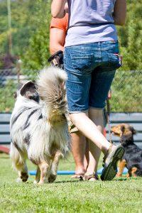 Erziehungskurs 1 @ Hundeschule  | Pforzheim | Baden-Württemberg | Deutschland