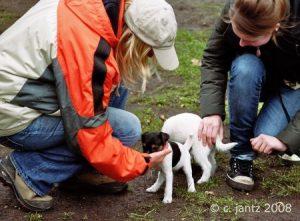 Welpen-Kurs @ Hundeschule Uwe Schwitalla | Pforzheim | Baden-Württemberg | Deutschland