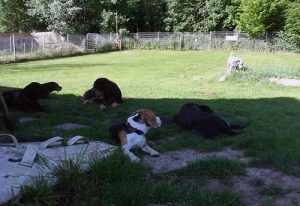 Hundekindergarten