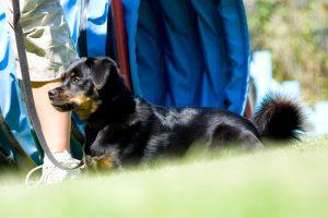 Erziehungskurs 3 @ Hundeschule Uwe Schwitalla