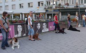Erziehungskurs 1 @ Hundeschule Uwe Schwitalla