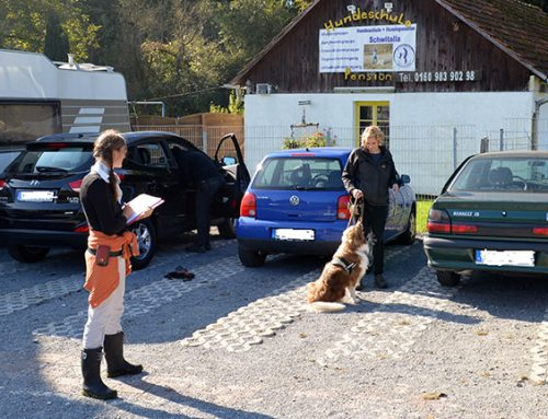 BHV Hundeführerschein 2015