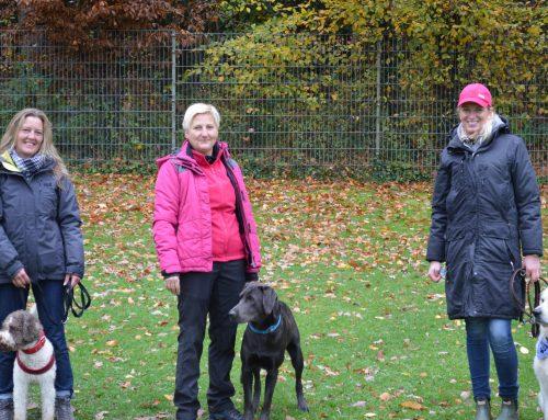 BHV Hundeführerschein 2017