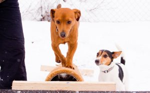 Erlebnispädagogik @ Hundeschule Uwe Schwitalla
